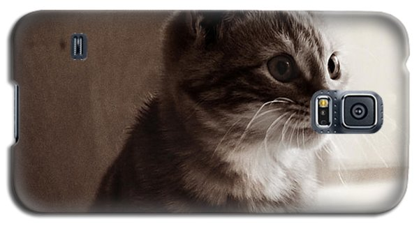 Kitten In The Light Galaxy S5 Case by Melanie Lankford Photography