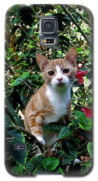 Kitten Galaxy S5 Case by Pamela Walton