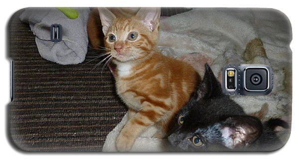 Galaxy S5 Case featuring the photograph Kittens 1 by Miriam Shaw
