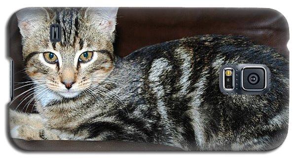 Kitty Galaxy S5 Case