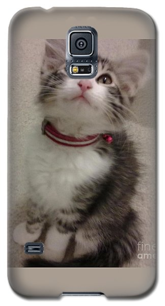 Kitty - Forgotten Innocence Galaxy S5 Case by Barbara Yearty