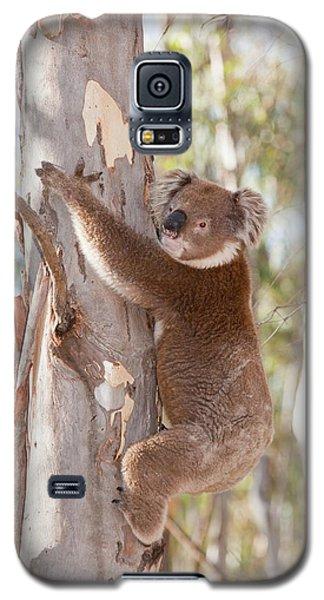 Koala Bear Galaxy S5 Case by Ashley Cooper