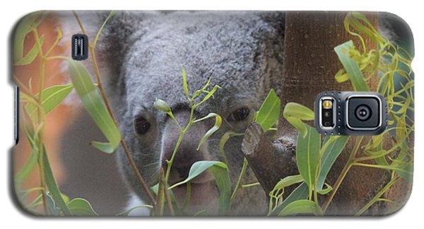Koala Bear  Galaxy S5 Case by Dan Sproul