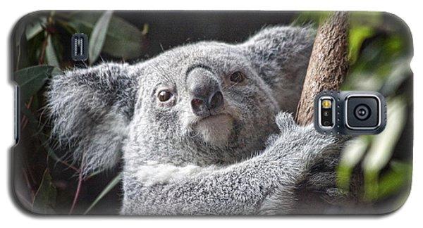 Koala Bear Galaxy S5 Case by Tom Mc Nemar