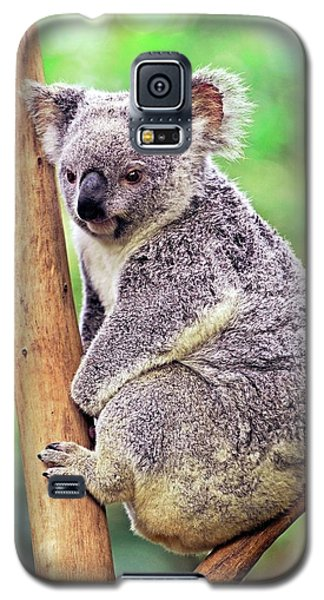 Koala Galaxy S5 Case - Koala In A Tree by Bildagentur-online/mcphoto-schulz