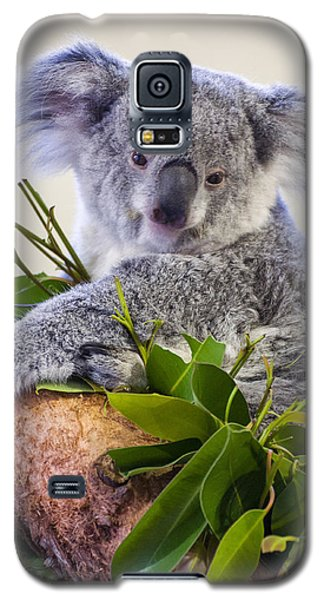 Koala On Top Of A Tree Galaxy S5 Case