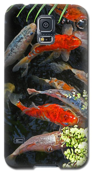 Koi Fish I Galaxy S5 Case