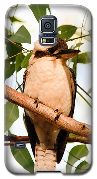 Galaxy S5 Case featuring the photograph Kookaburra 2 by Carole Hinding