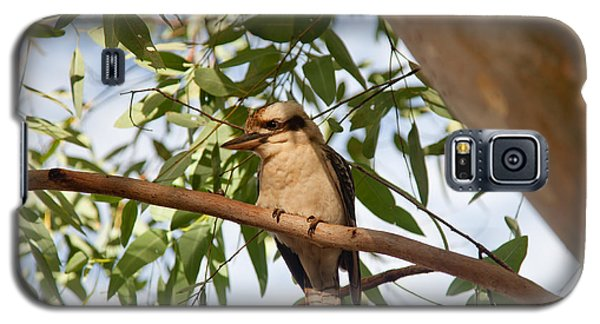 Galaxy S5 Case featuring the photograph Kookaburra 3 by Carole Hinding