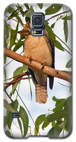 Galaxy S5 Case featuring the photograph Kookaburra by Carole Hinding