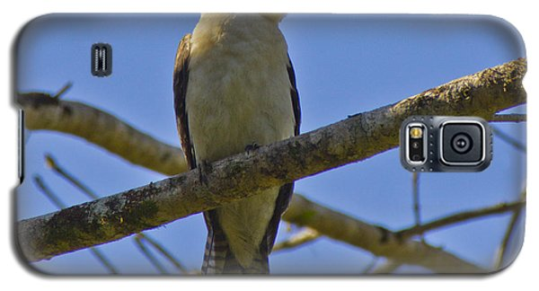 Kookaburra Galaxy S5 Case
