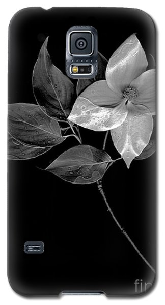 Kousa Dogwood In Black And White Galaxy S5 Case