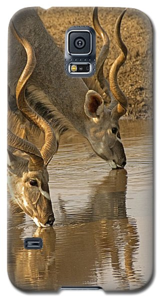 Galaxy S5 Case featuring the photograph Kudus by Dennis Cox WorldViews