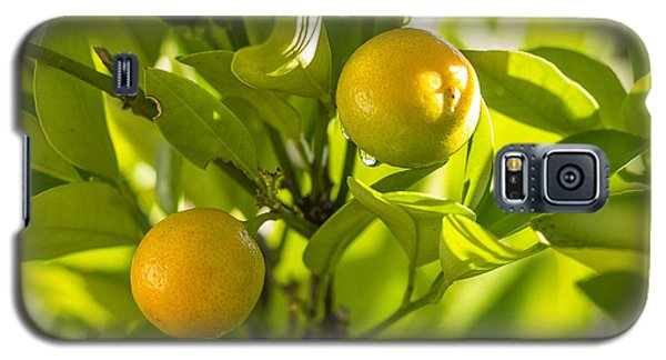 Kumquats Galaxy S5 Case