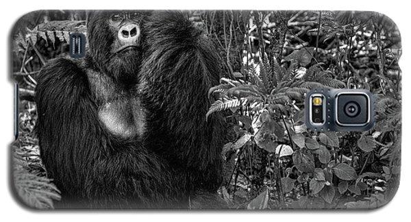 Gorilla Galaxy S5 Case - Kwitonda Silverback by Karen Lunney