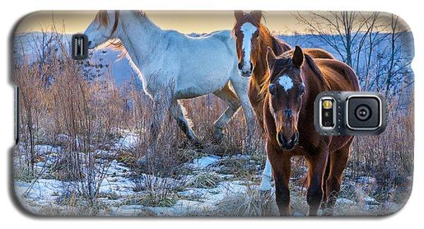 Ky Wild Horses Galaxy S5 Case