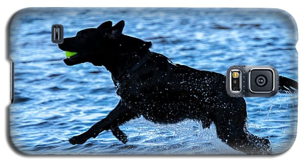 Galaxy S5 Case featuring the photograph Labrador On The Run by Eleanor Abramson