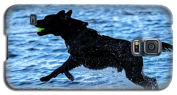Labrador On The Run Galaxy S5 Case by Eleanor Abramson
