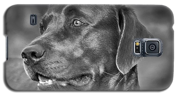 Labrador Sweetie Galaxy S5 Case