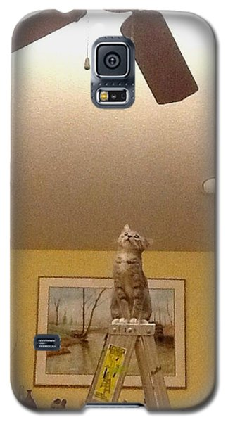 Ladder Cat Galaxy S5 Case by Stacy C Bottoms