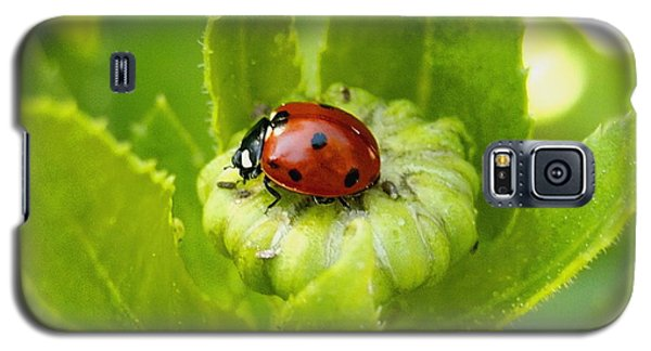 Lady Bug In The Garden Galaxy S5 Case by Amy McDaniel
