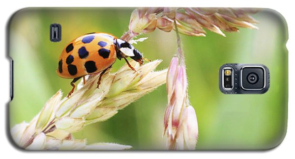 Lady Bug On A Warm Summer Day Galaxy S5 Case by Andrew Pacheco