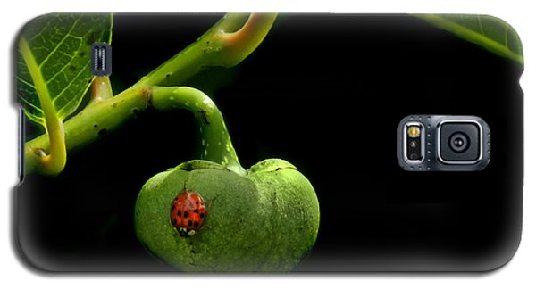 Lady Bug On Pond Apple Galaxy S5 Case