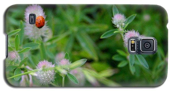 Galaxy S5 Case featuring the photograph Lady Bug On Purple Blossom by Paula Tohline Calhoun