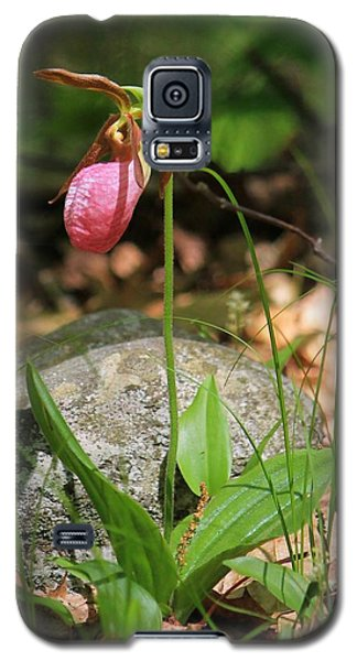 Lady Slippers At Moore State Park 3 Galaxy S5 Case