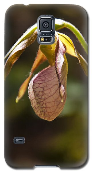 Lady Slipper No 4 Galaxy S5 Case by Daniel Hebard