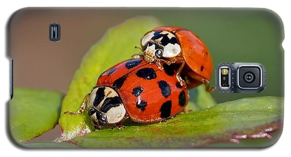 Ladybird Coupling Galaxy S5 Case