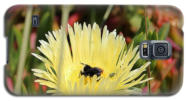 Galaxy S5 Case featuring the photograph Ladybug And A Bumblebee by Kevin Ashley