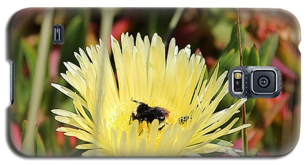 Ladybug And A Bumblebee Galaxy S5 Case by Kevin Ashley