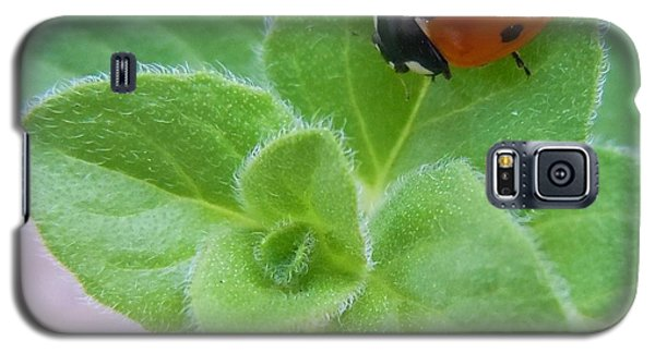 Galaxy S5 Case featuring the photograph Ladybug And Oregano by Robert ONeil