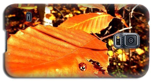 Ladybug At Fall Galaxy S5 Case