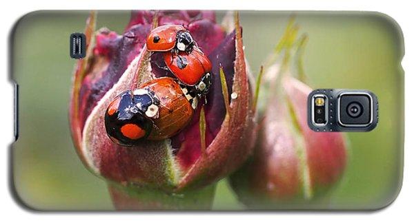 Ladybug Foursome Galaxy S5 Case