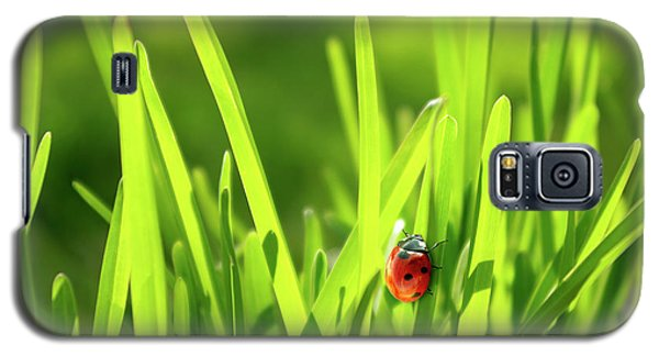 Ladybug In Grass Galaxy S5 Case