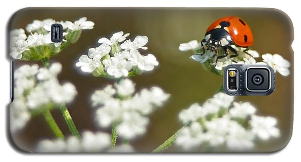 Ladybug In White Galaxy S5 Case