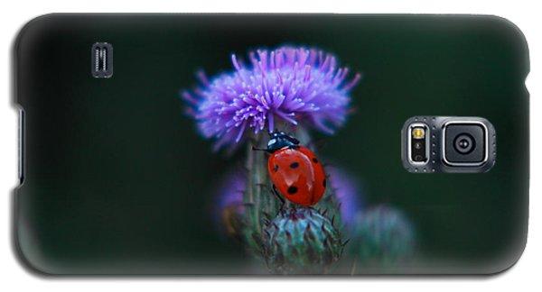 Ladybug Galaxy S5 Case by Jeff Swan