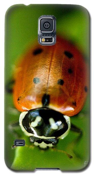 Ladybug On Green Galaxy S5 Case by Iris Richardson
