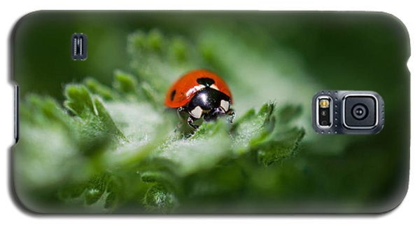 Ladybug On The Move Galaxy S5 Case