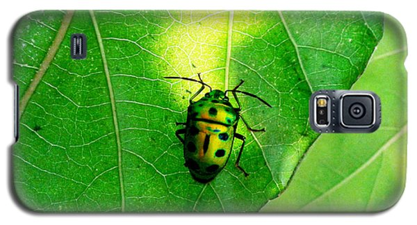 Ladybug Galaxy S5 Case by Ramabhadran Thirupattur