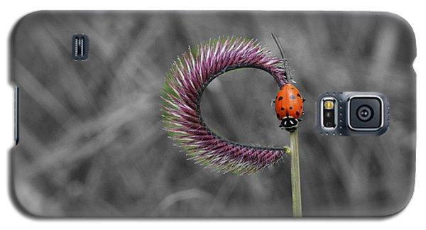 Ladybug Galaxy S5 Case