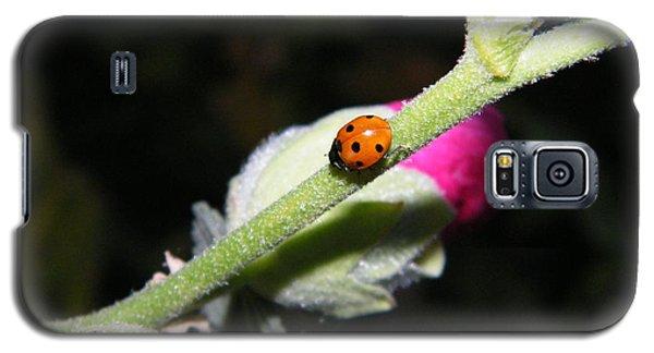 Ladybug Taking An Evening Stroll Galaxy S5 Case