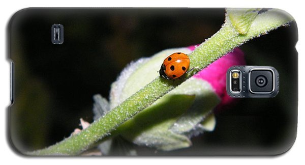Ladybug Taking An Evening Stroll Galaxy S5 Case