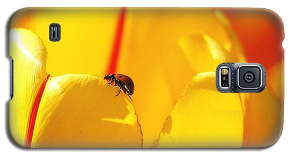 Galaxy S5 Case featuring the photograph Ladybug - The Journey by Susan  Dimitrakopoulos