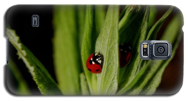Galaxy S5 Case featuring the photograph Ladybugs by Adria Trail