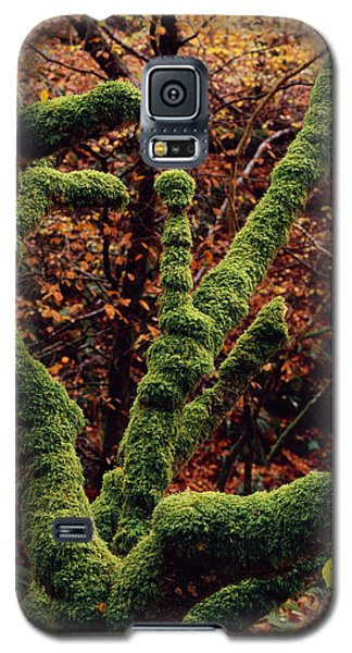 Lael Forest Garden 1 Galaxy S5 Case