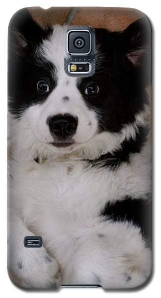 Laid Back Border Collie Galaxy S5 Case by John Colley