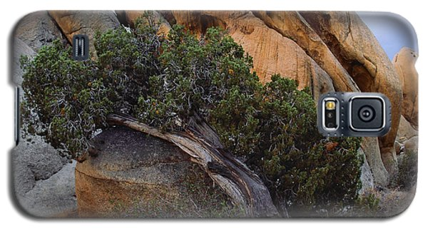 Laid Back Juniper Cropped Version Galaxy S5 Case